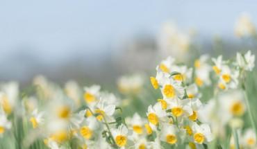 The Hippocratic Post - Narcissus