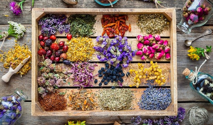 Common Herbs And Their Uses The Hippocratic Post
