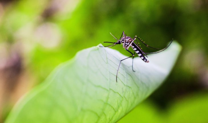 Close up view of real mosquito on a leaf