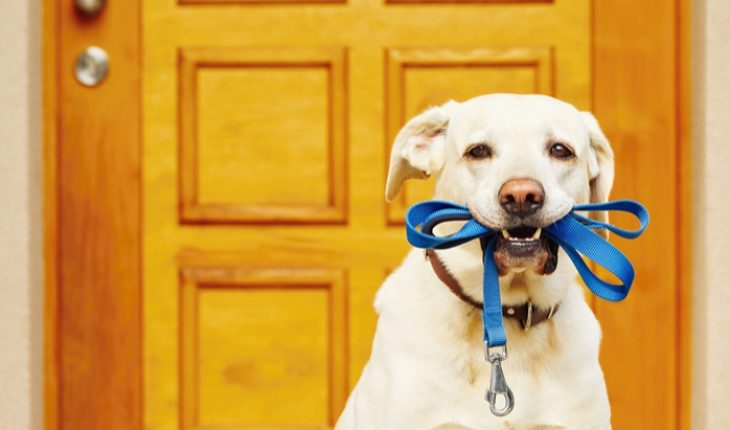 Dog walking to ward off decline - The Hippocratic Post