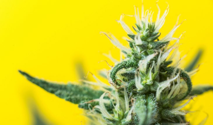 cannabis for severe epilepsy