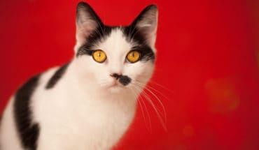 cats and coronavirus