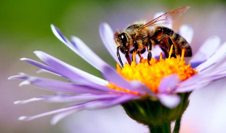 سم زنبور عسل - ملیتین - برای درمان سرطان پستان بسیار موثر است